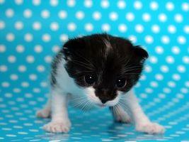 Бесплатные фото котенок,глаза,морда,лапы,шерсть
