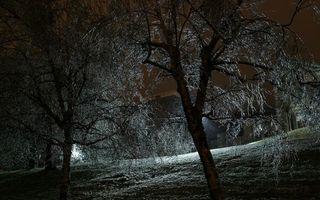 Бесплатные фото ночь, фонари, свет, деревья, ветви, трава, разное