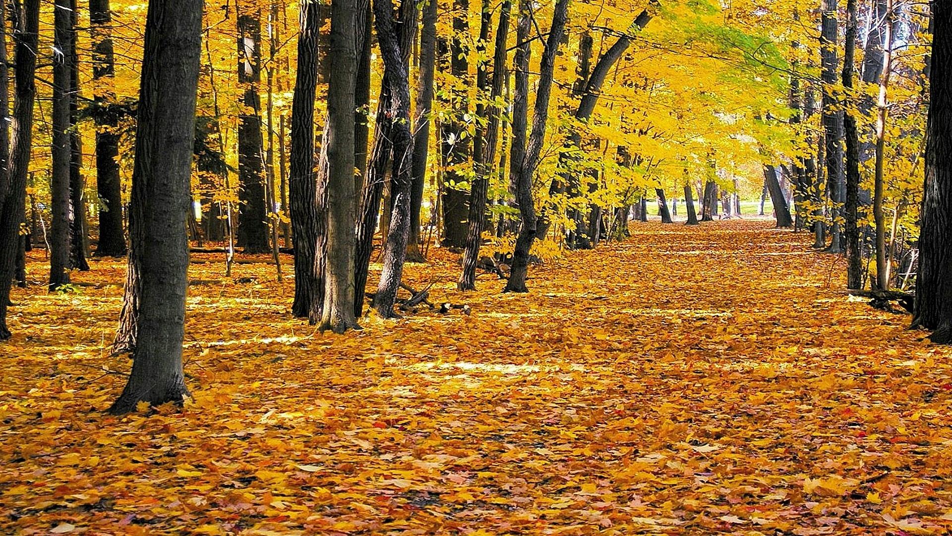 Обои осень, аллея, листья, парк