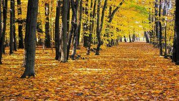 Фото бесплатно осень, аллея, листья