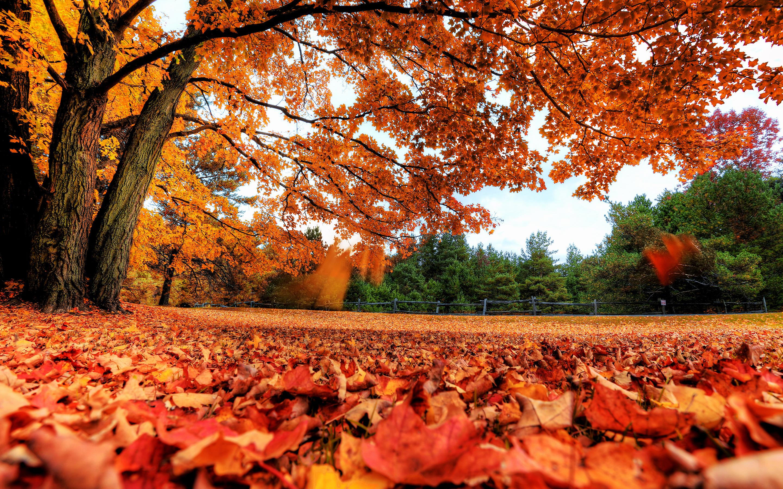 лес, осень, листопад без смс