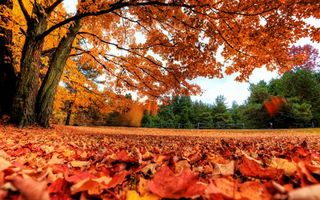 Бесплатные фото осень,листопад,листья,клен,парк,забор,природа