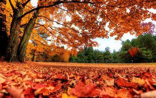 Фото бесплатно осень, листопад, листья
