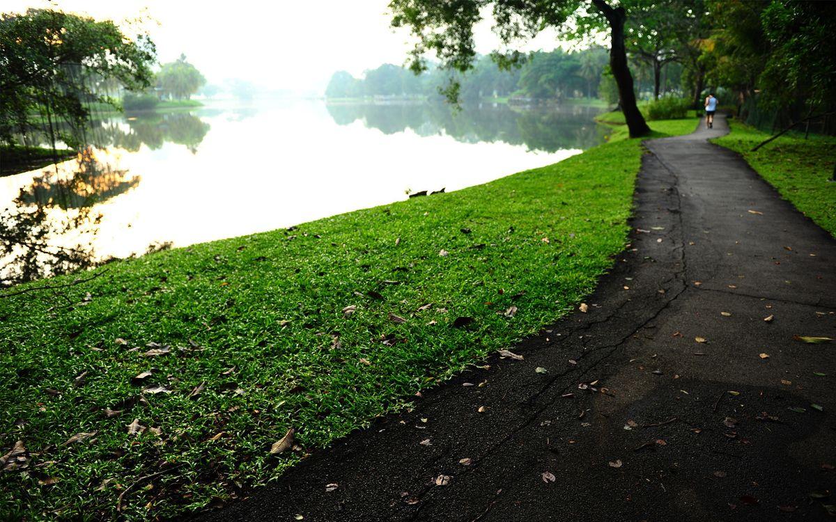 Фото бесплатно парк, озеро, деревья, газон, листва, дорожка, бегун, разное, разное - скачать на рабочий стол