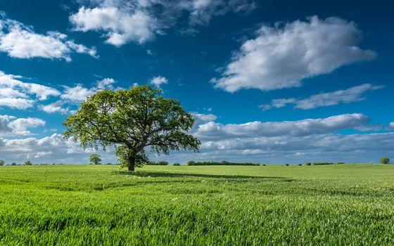 Photo free field, green field, lone tree