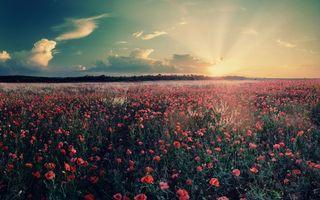 Фото бесплатно Восход, солнце, Красная