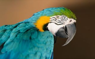 Photo free parrot, color, eyes