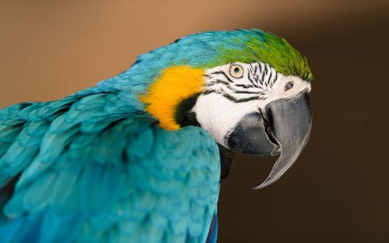 Фото бесплатно попугай, цветной, глаза