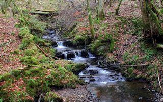 Бесплатные фото ручей,камни,трава,листва,деревья,мох,осень