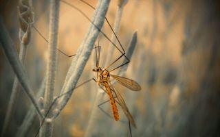 Заставки стрекоза,крылья,лапки,стебли,трава,зелень,растения