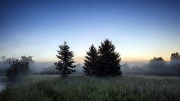 Бесплатные фото трава,деревья,туман,кусты,небо,природа