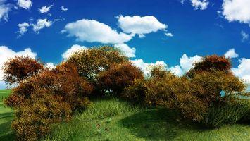 Фото бесплатно трава, холм, кусты