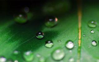 Бесплатные фото трава, растение, зеленое, капли, роса, вода, стебель