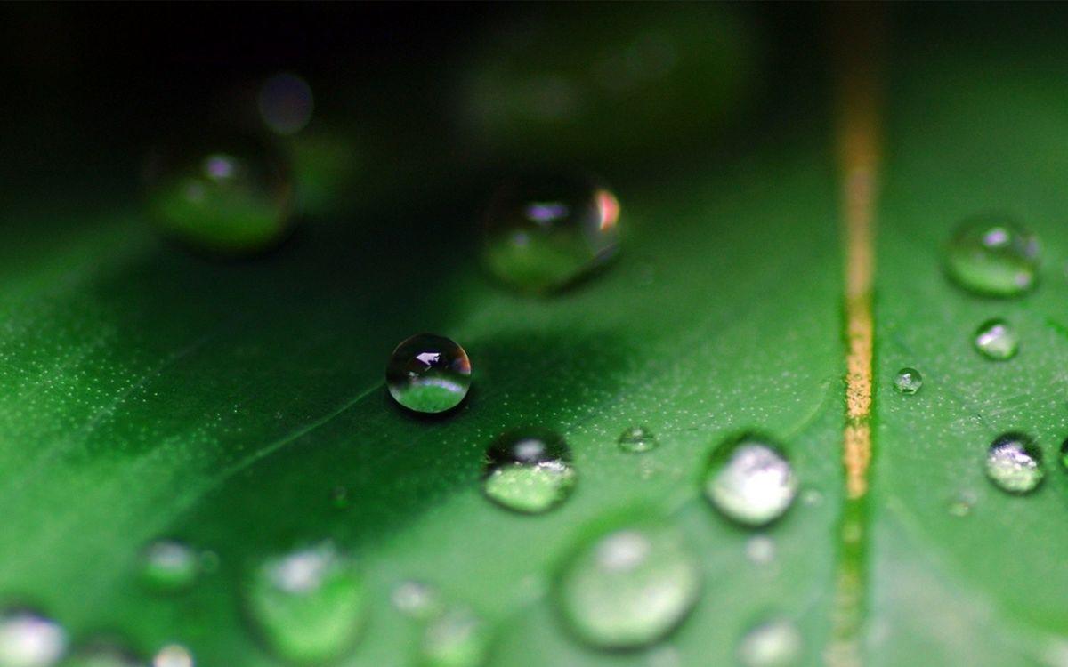 Фото бесплатно трава, растение, зеленое, капли, роса, вода, стебель, макро, природа, природа