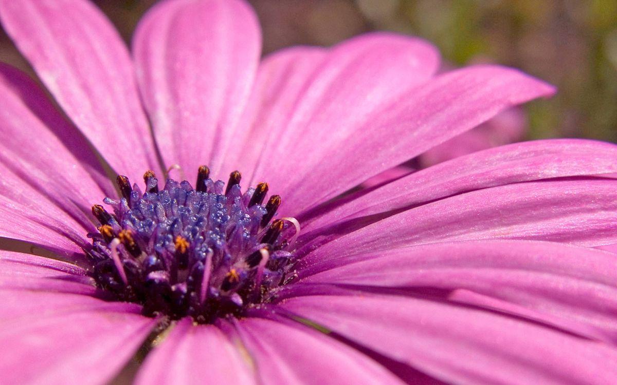 Фото цветов на мобилу