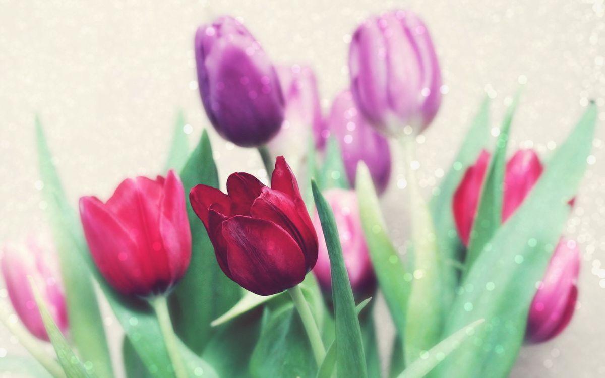 Фото бесплатно тюльпаны, бутон, лепестки, зелень, букет, цвета, цветы, цветы