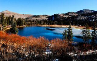 Фото бесплатно лес, лед, вода