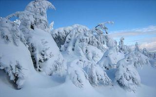 Бесплатные фото зима,снег,сугробы,елки,под снегом,природа
