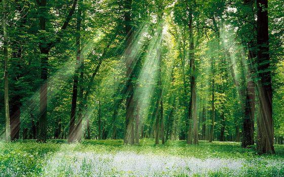 Фото бесплатно лес, солнце, лучи