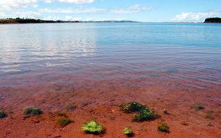 Бесплатные фото берег,пляж,дно,песок,красный,море,океан