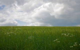 Фото бесплатно поле, трава, тучи