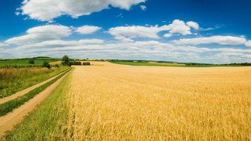 Бесплатные фото поле,пшено,дорога,трава,простор,небо,пейзажи