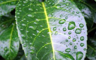 Фото бесплатно капли, дождь, лист