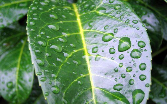 Бесплатные фото капли,дождь,лист,дерево,природа