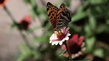 Photo free butterfly, flower, wings