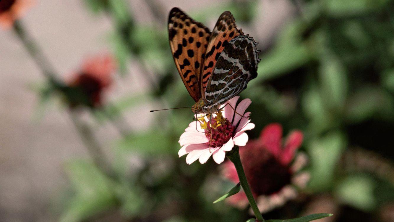 Фото бесплатно бабочка, цветок, крылья - на рабочий стол