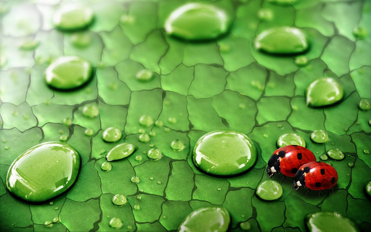 Photos for free ladybugs, wings, specks - to the desktop