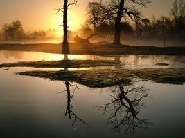 Бесплатные фото деревья,закат,рассвет,солнце,лучи,туман,ветки