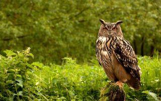 Бесплатные фото филин,сова,перья,оперение,взгляд,глаза,клюв
