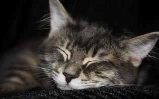 Бесплатные фото кот,голова,шерсть,нос,уши,усы,сон