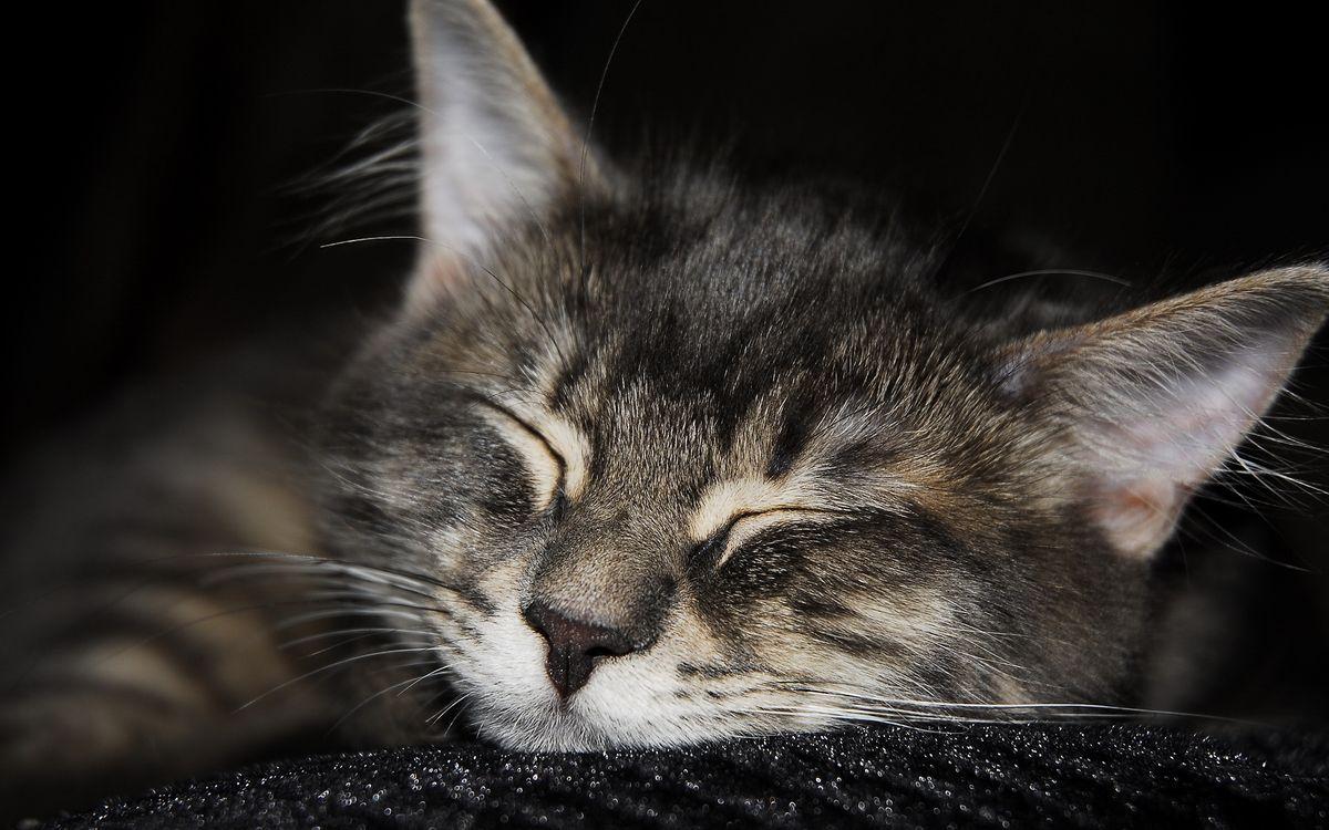 Фото бесплатно кот, голова, шерсть - на рабочий стол