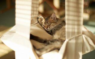 Бесплатные фото кот,котенок,сон,домик,кровать,уши,шерсть