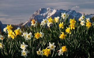 Photo free petals, yellow, white