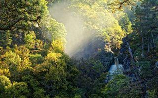 Бесплатные фото лес,деревья,трава,листья,лучи,солнце,природа