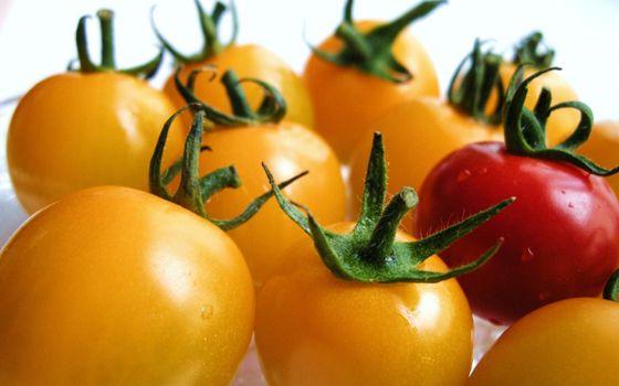 Photo free tomatoes, cherry, yellow