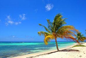 Фото бесплатно пальмы, тропики, пейзажи