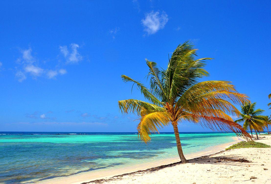 Фото бесплатно пальмы, тропики, пейзажи - на рабочий стол