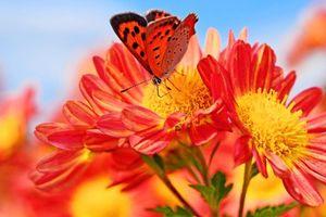 Бесплатные фото цветы,бабочка,макро