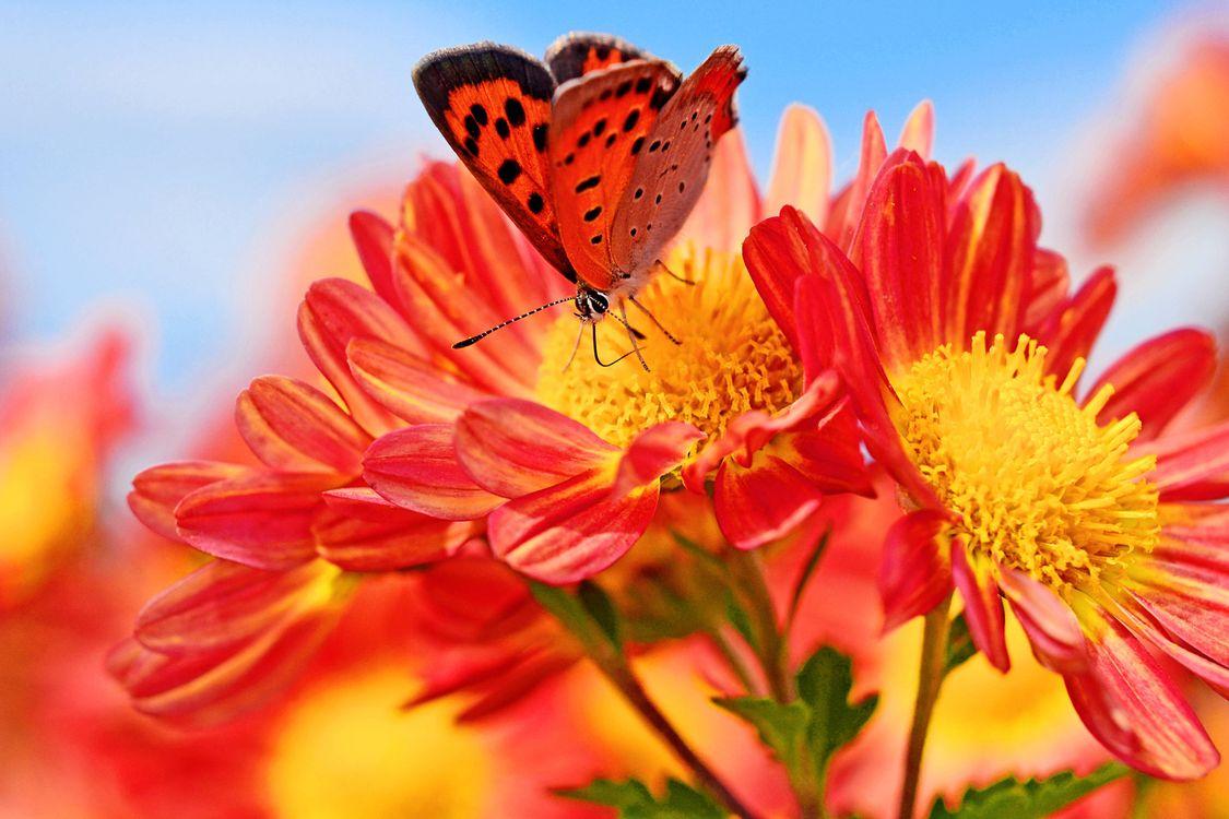 Фото бесплатно цветы, бабочка, макро - на рабочий стол