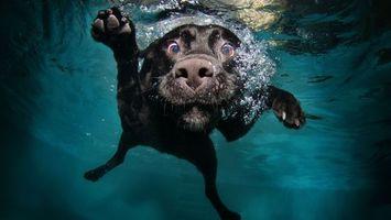 Фото бесплатно собака, ныряет, вода, морда, глаза, лапы
