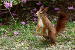 Photo free squirrel, animal, rodent