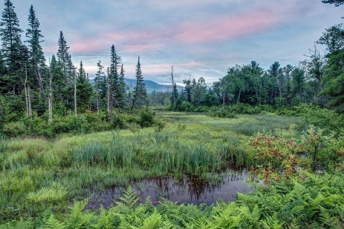 Фото бесплатно Нью-Гемпшир, Новая Англия, водоём, болото, закат, деревья, пейзаж, пейзажи