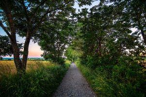 Заставки дорога, деревья, поле, пейзаж