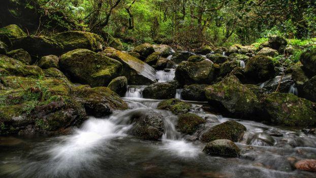 Бесплатные фото ручей,течение,камни,мох,кустарник,деревья