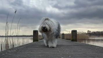 Фото бесплатно пес, пушистый, морда