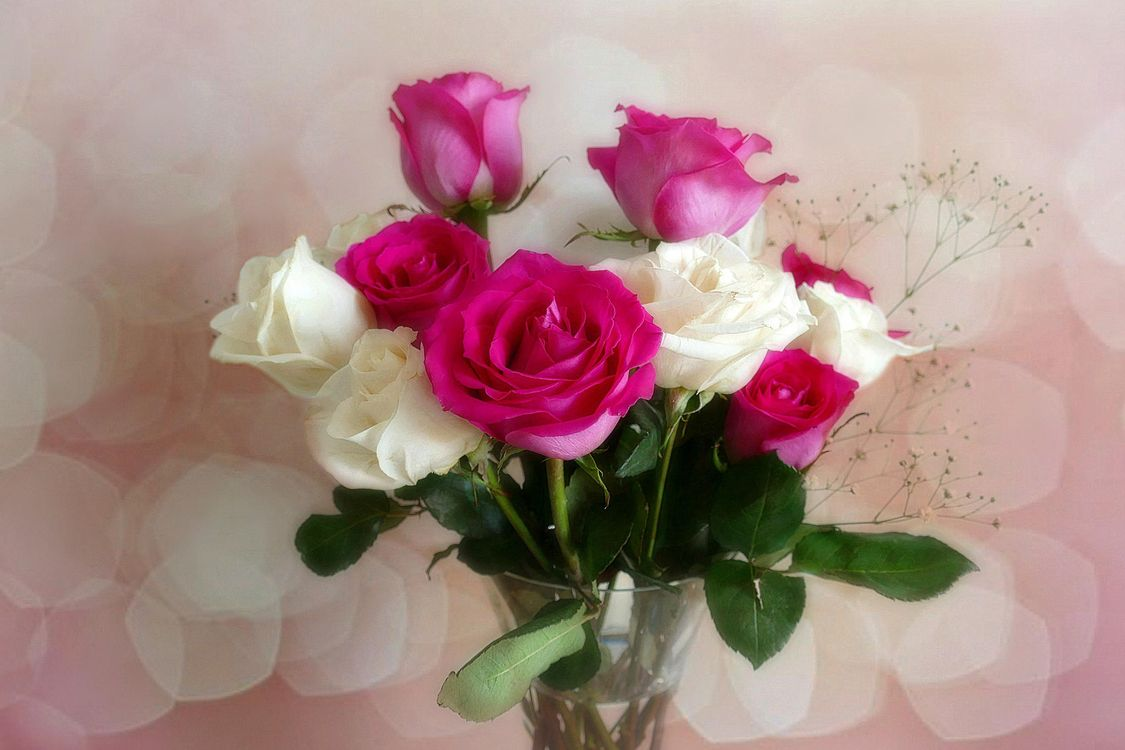 Free photo vase, roses, flowers - to desktop